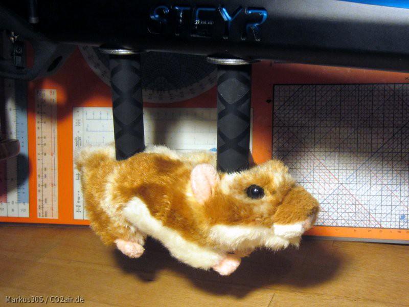 Goldie, mein neuer Hamster